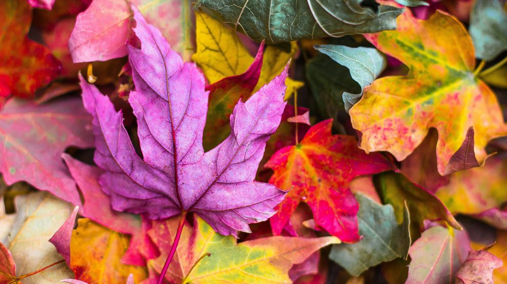 How you create the perfect autumn table scape